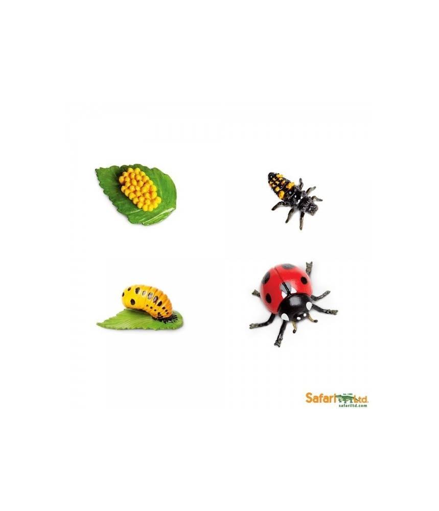 La coccinelle - Cycle de la vie Safari LTD