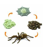 L'araignée - Cycle de la vie Safari LTD